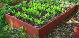 Taller de Huerta Agroecológica 2016
