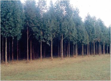 """Conferencia – Debate sobre """"Los sistemas de certificación forestal y legalidad de la madera: intereses y actores""""."""