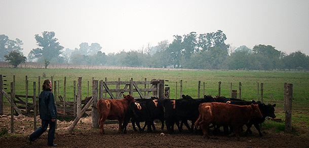 Curso de Extensión de Bienestar Animal