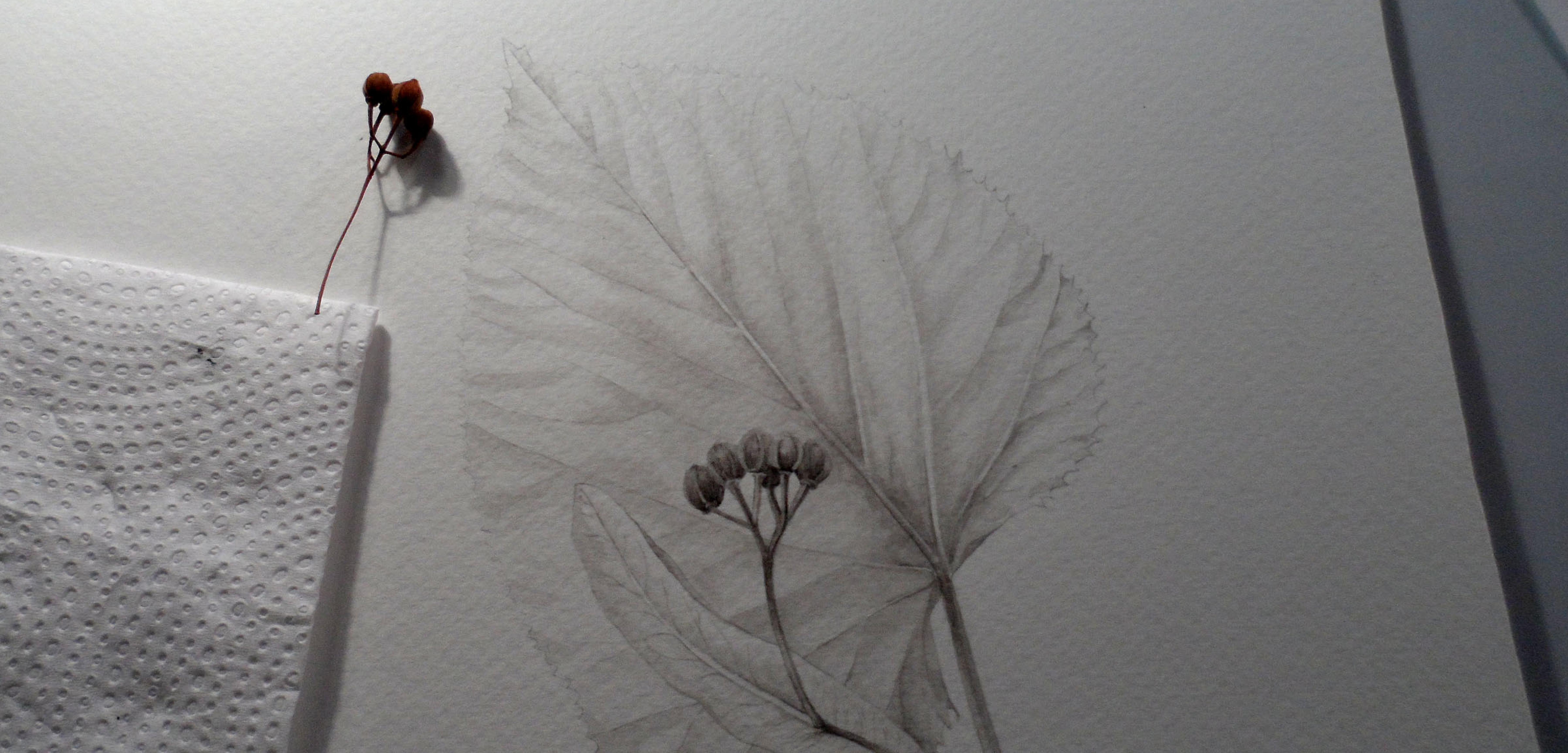 De la Observación a la Ilustración Científica Botánica