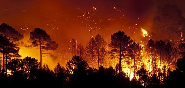 La Facultad ante los incendios en Amazonia