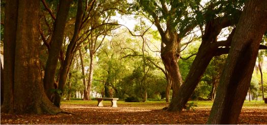 Jardín Botánico y Arboretum