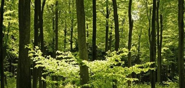 Día del Ingeniero Forestal
