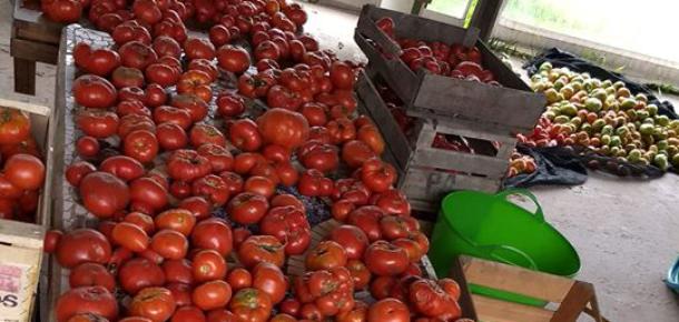 Se viene la 16º Fiesta del Tomate Platense