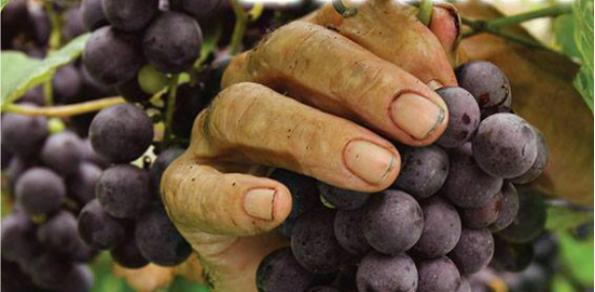 17º Fiesta del vino de la Costa de Berisso