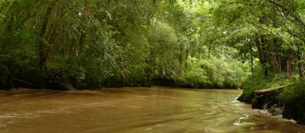 Ley de Bosques Nativos