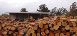 Participación del LISEA en las XXXIII Jornadas Forestales de Entre Ríos