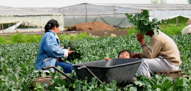 """Panel abierto a toda la Comunidad:  """"Extensión ¿Agroecológica?: Logros y Desafíos en Experiencias Locales"""""""
