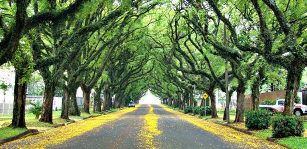 Jornada de Capacitación para Municipios sobre Forestación Urbana y Periurbana