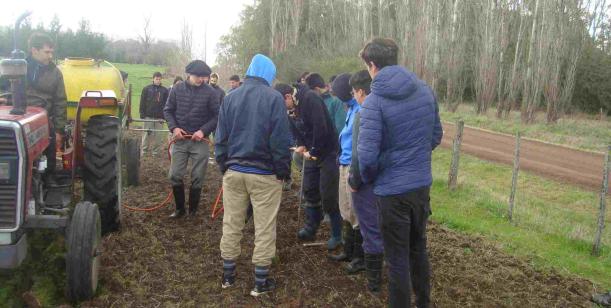 Silvicultura de salicáceas en la cuenca del Salado
