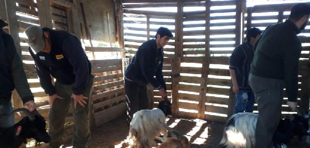 Taller sobre diagnóstico de preñez y condición corporal en cabras