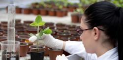 Convocatoria para subsidios para las Unidades de Investigación