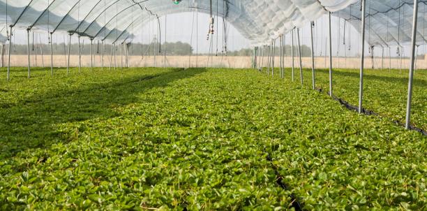 Jornadas del Proyecto de Extensión Producción Flori-Hortícola Sustentable. Producciones intensivas en el cinturón flori-hortícola Gran La Plata