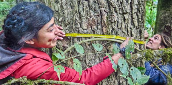 Relevamiento de Bosques  Nativos en  Tucumán